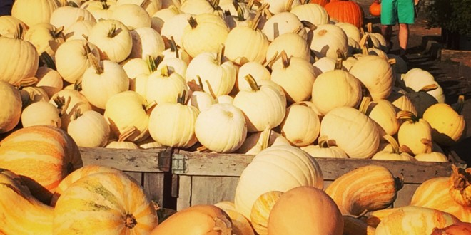 Linvilla Orchards: A Delco Fall Tradition