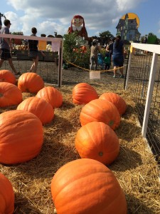 Linvilla Orchards Pumpkinland