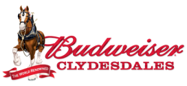 Budweiser Clydesdales Come to Media